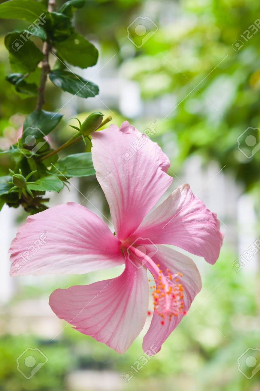 Pink flower Stock Photo - 14869236
