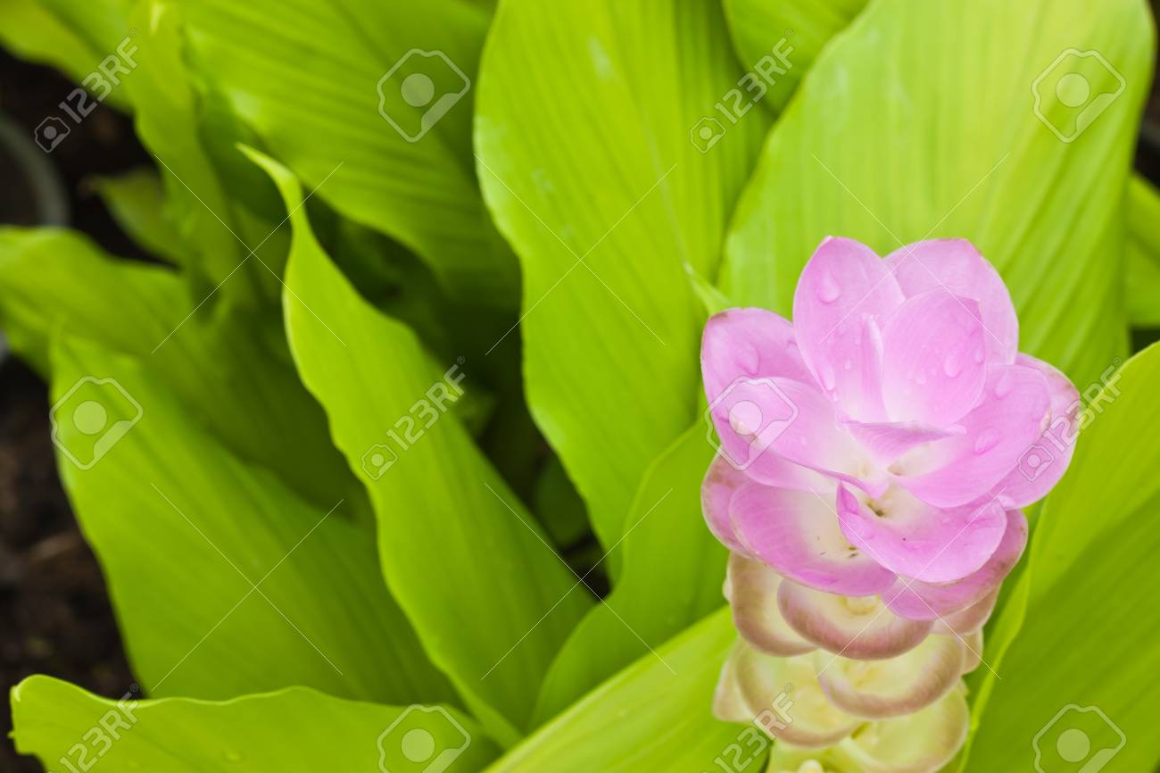 Pink flower Stock Photo - 15088848