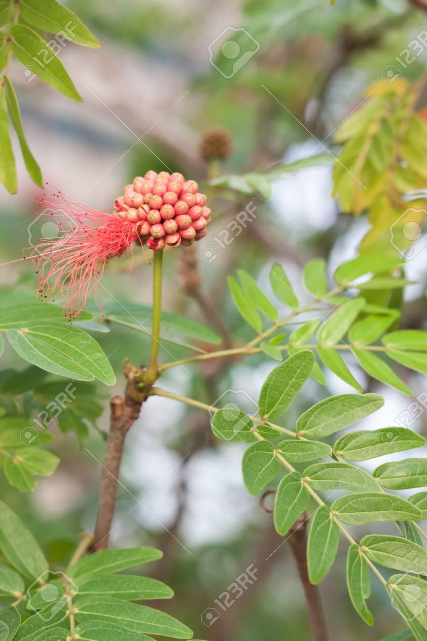 Wildflowers Stock Photo - 16889550