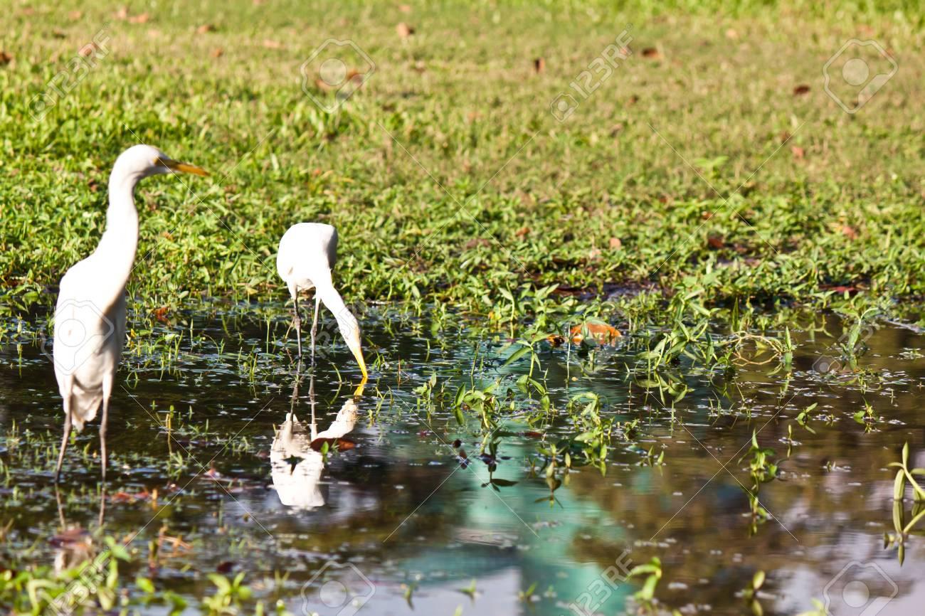 white bird Stock Photo - 17391742