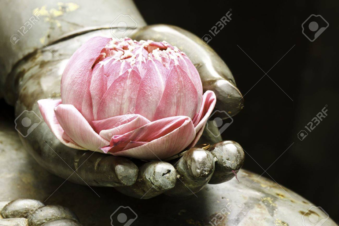 lotus in hand - 21412351