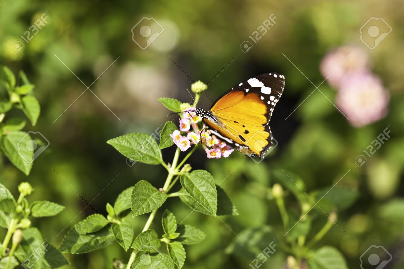 butterfly with flower stock photo picture and royalty free image