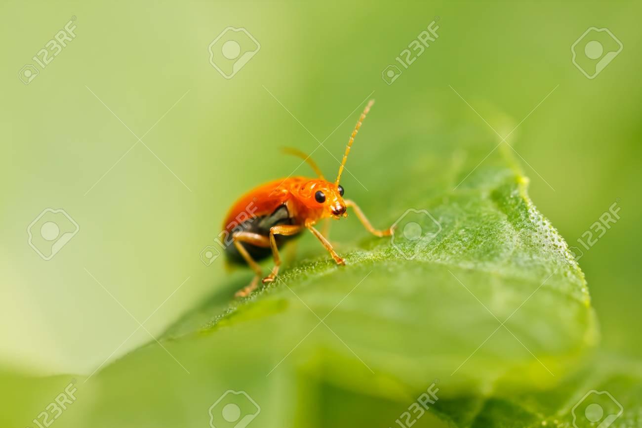 little bug Stock Photo - 24124191