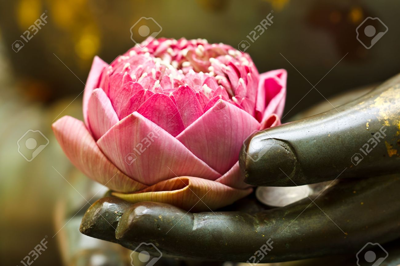 the pink lotus in hand of buddha - 27727384