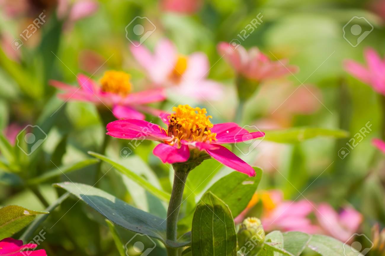 Beautiful flower in garden stock photo picture and royalty free beautiful flower in garden stock photo 36961584 izmirmasajfo