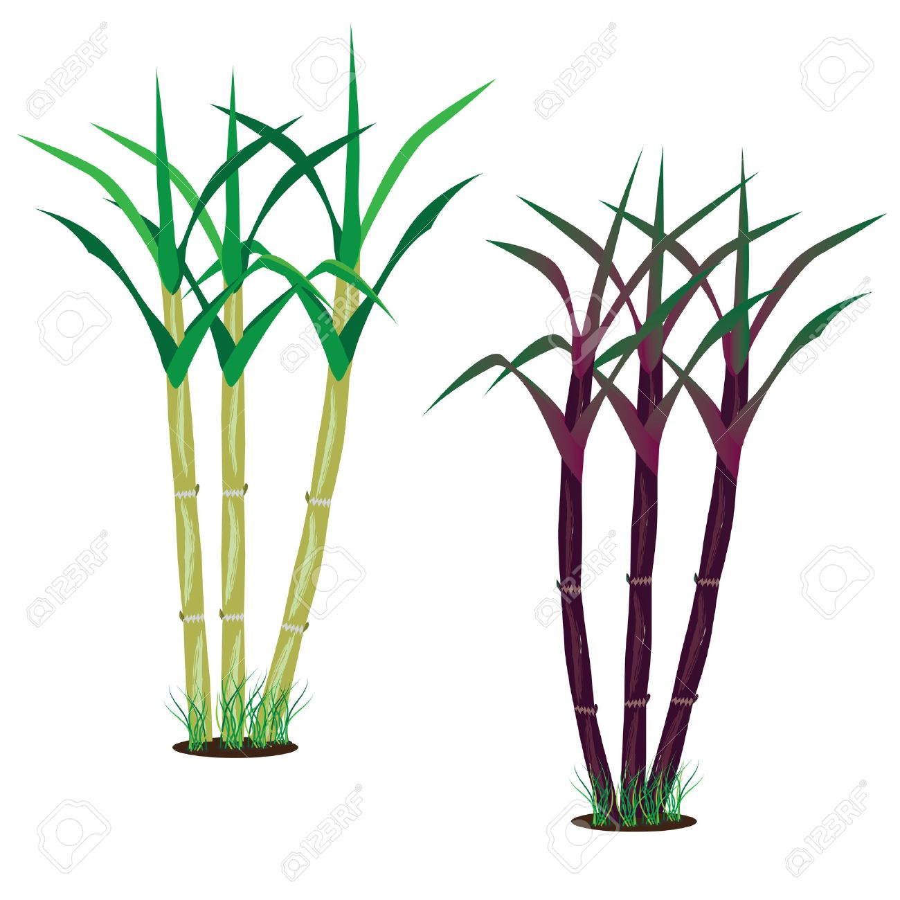 sugarcane vector design royalty free cliparts vectors and stock rh 123rf com images of sugarcane clipart sugar cane clipart black and white