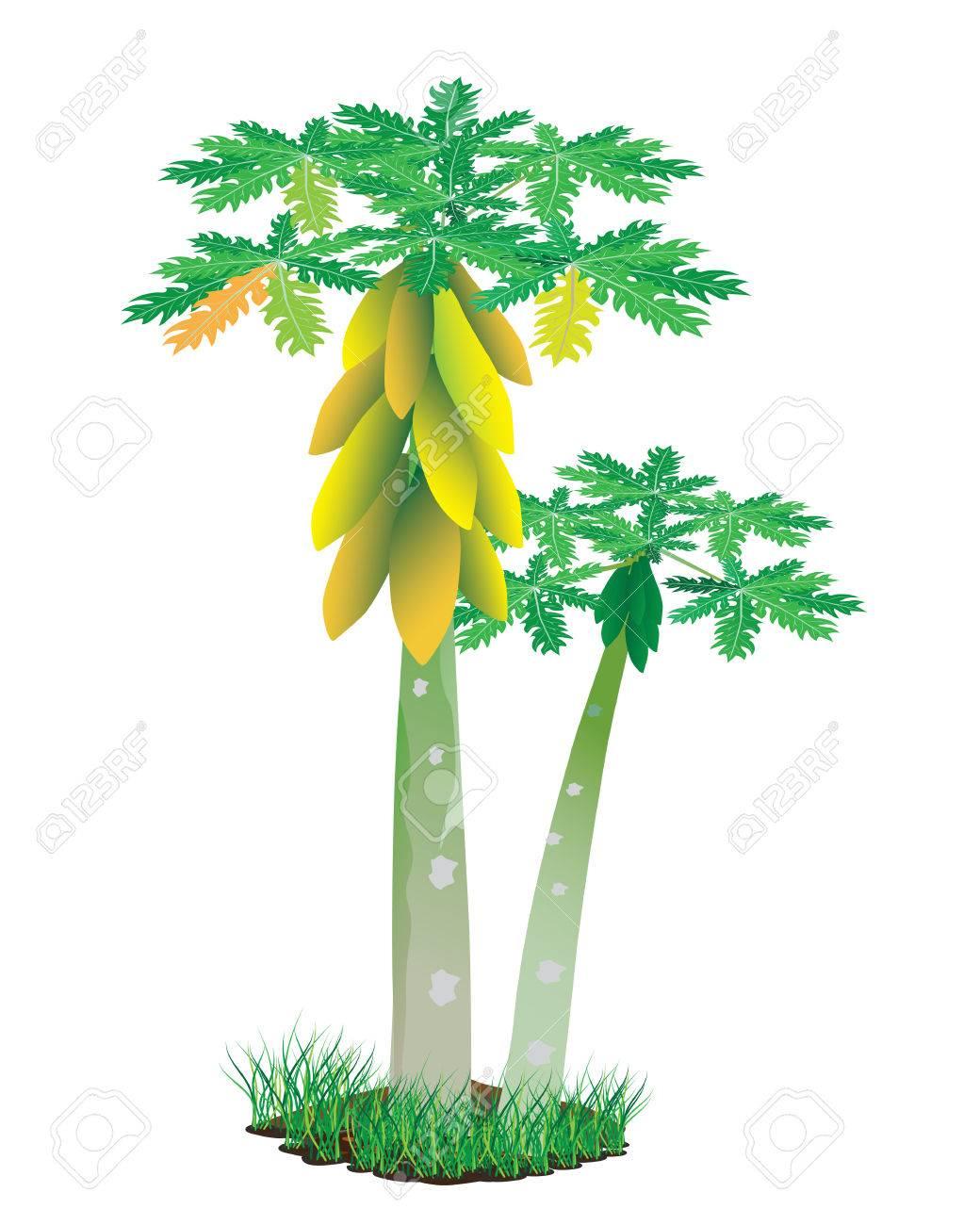 papaya plant vector design - 41200629