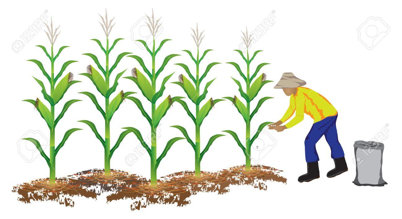agriculturist manure corn plant vector design - 41200856