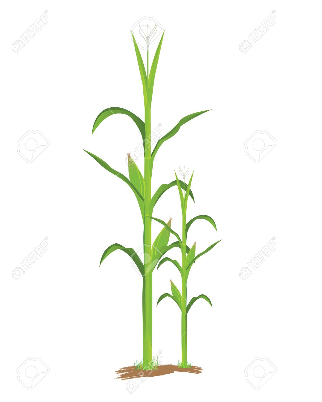 corn plant vector design royalty free cliparts vectors and stock rh 123rf com plant vector stock request plant vector protection