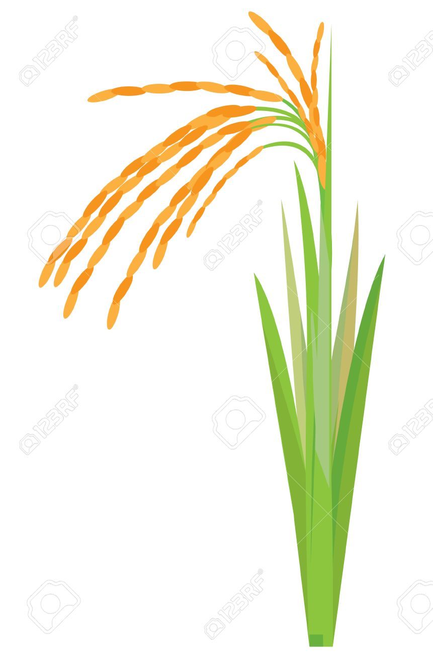 rice plant vector design royalty free cliparts vectors and stock illustration image 56497141 rice plant vector design