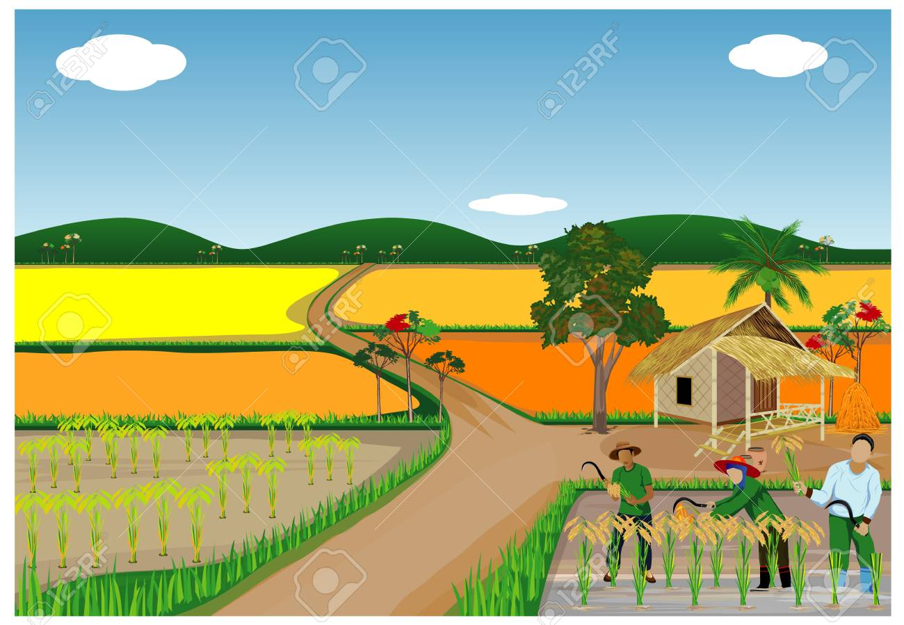 The Rice Harvest PNG Images | Vector and PSD Files | Free Download on  Pngtree