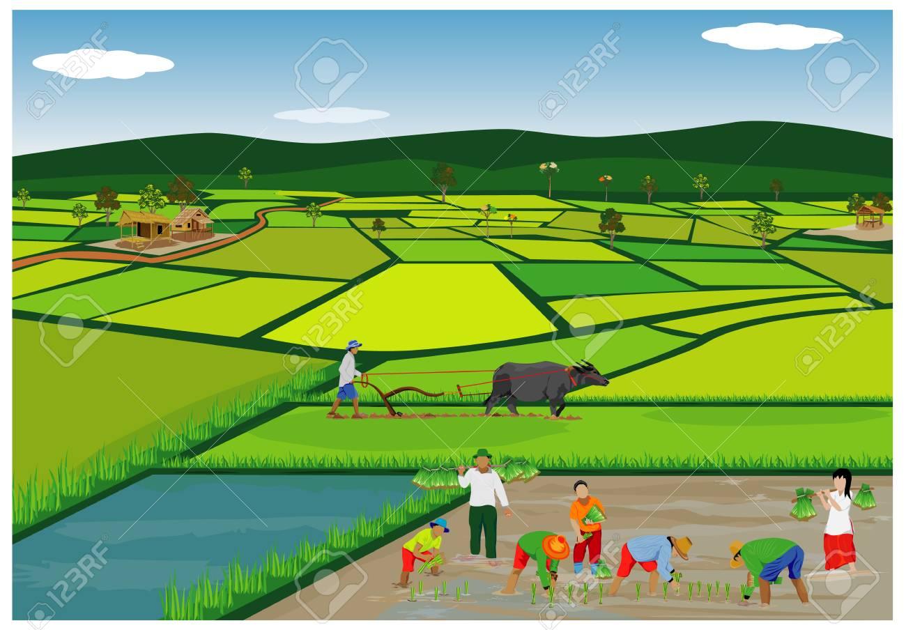 水田における稲作農家のイラスト のイラスト素材 ベクタ Image
