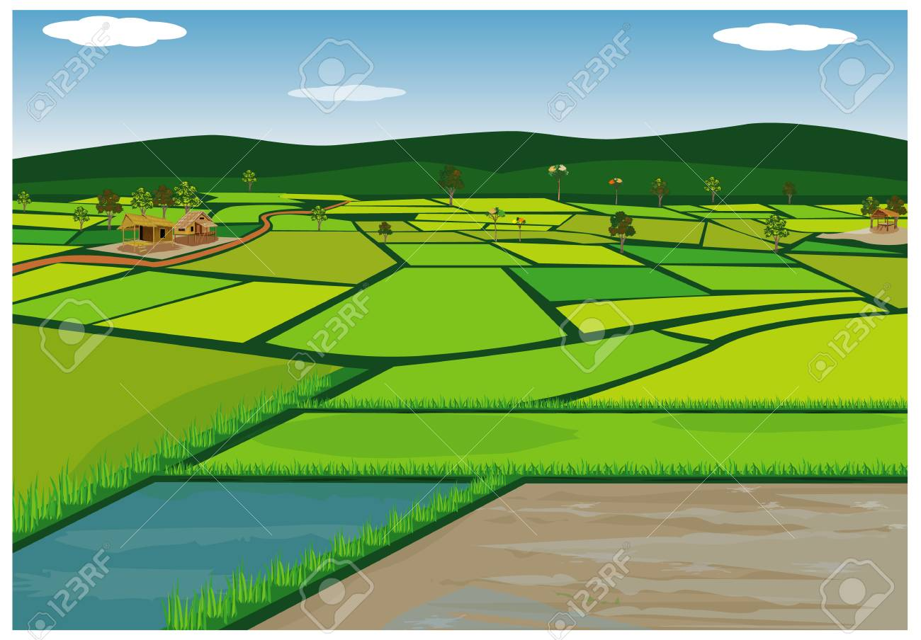 big paddy field vector design - 90863717