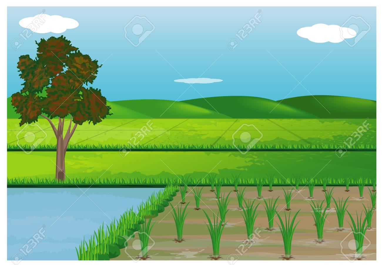paddy field vector design - 90863723