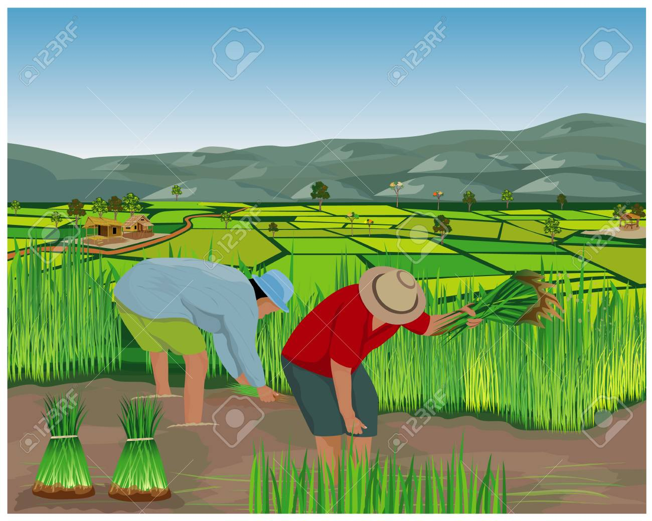 farmer work in paddy field vector design - 110831643
