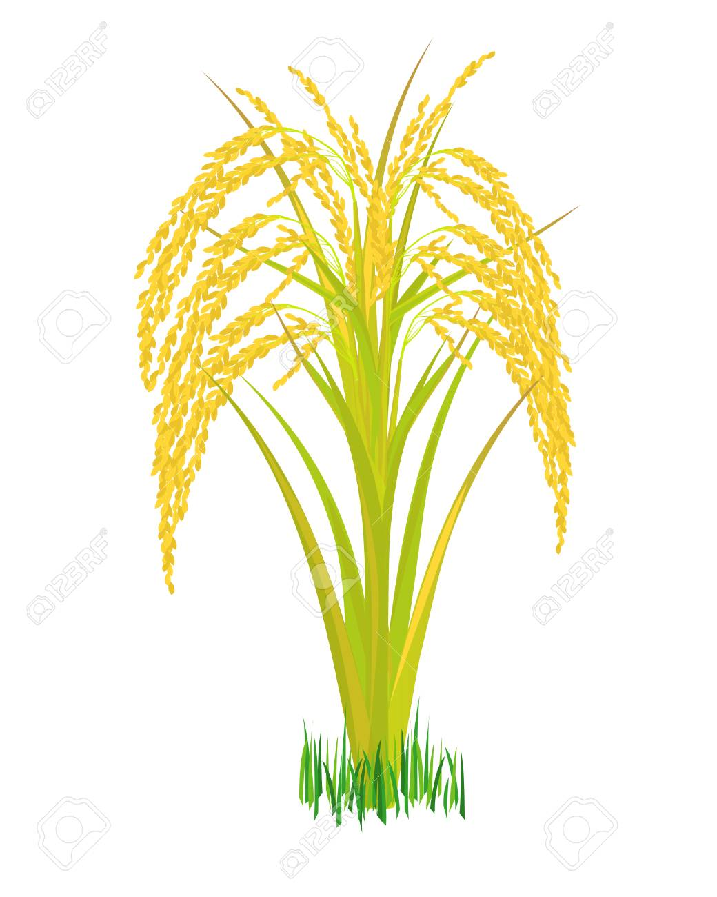 rice plant vector design royalty free cliparts vectors and stock illustration image 116067413 rice plant vector design