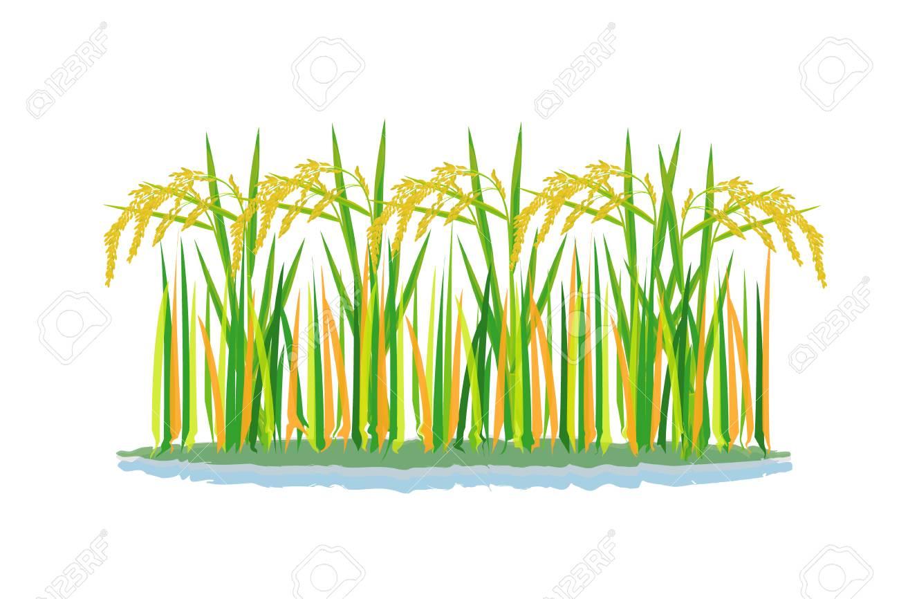 rice plant vector design - 118896425