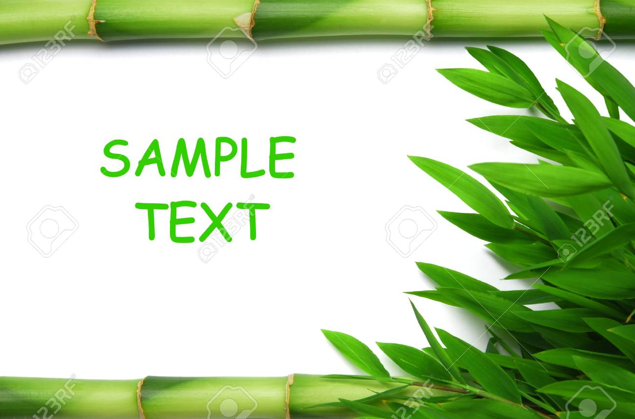 Bamboo stems and leaves Stock Photo - 10556015