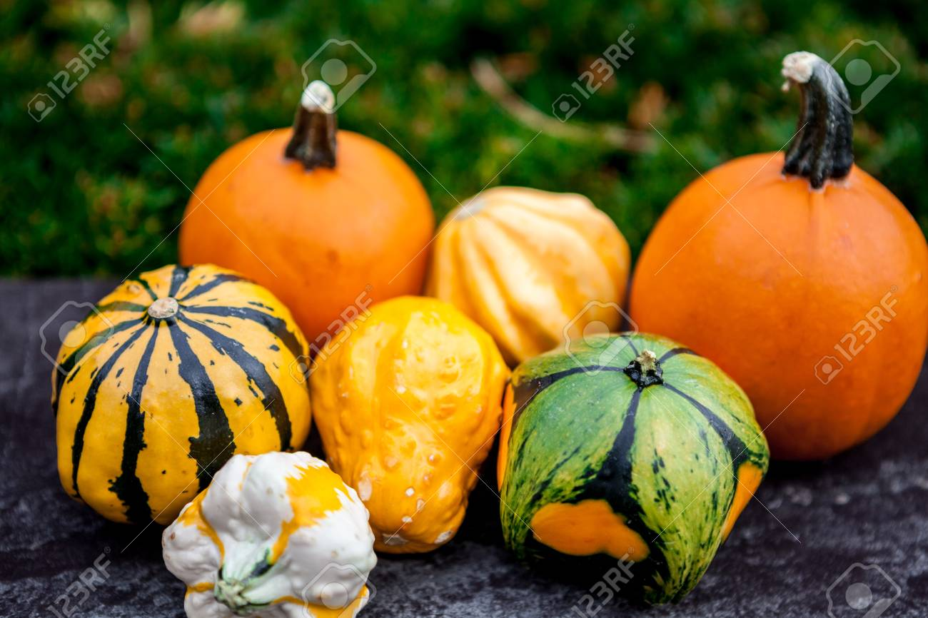 Fresh Multicolored Decorative Pumpkins Autumn Colors Thanksgiving