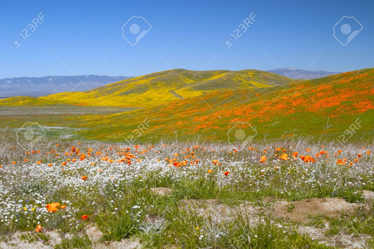 View of colorful flower fields including yellow, orange and white flowers. Stock Photo - 551629