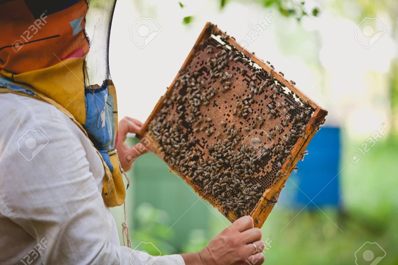 Imker, Der Rahmen Der Bienenwabe Mit Den Arbeitsbienen Hält, Die Im ...