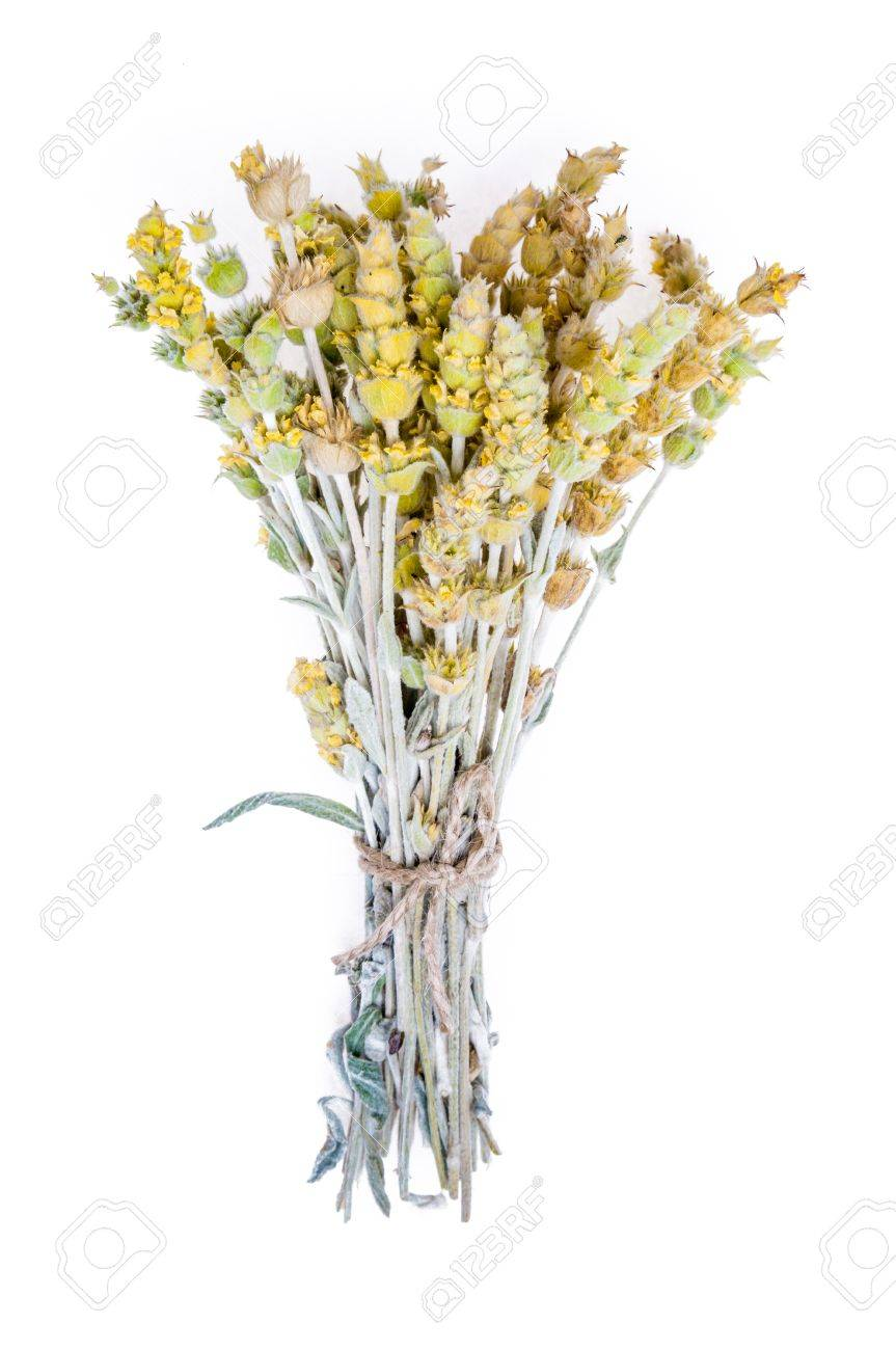 Bouquet Of Dried Flowers Yarrow On White Background The Yarrow