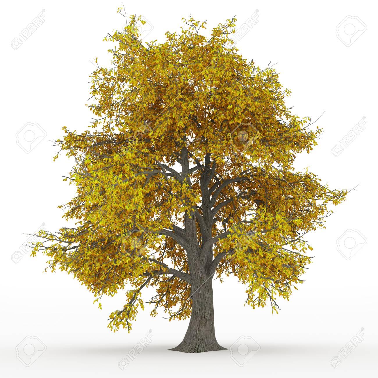 ash tree Stock Photo - 18093535