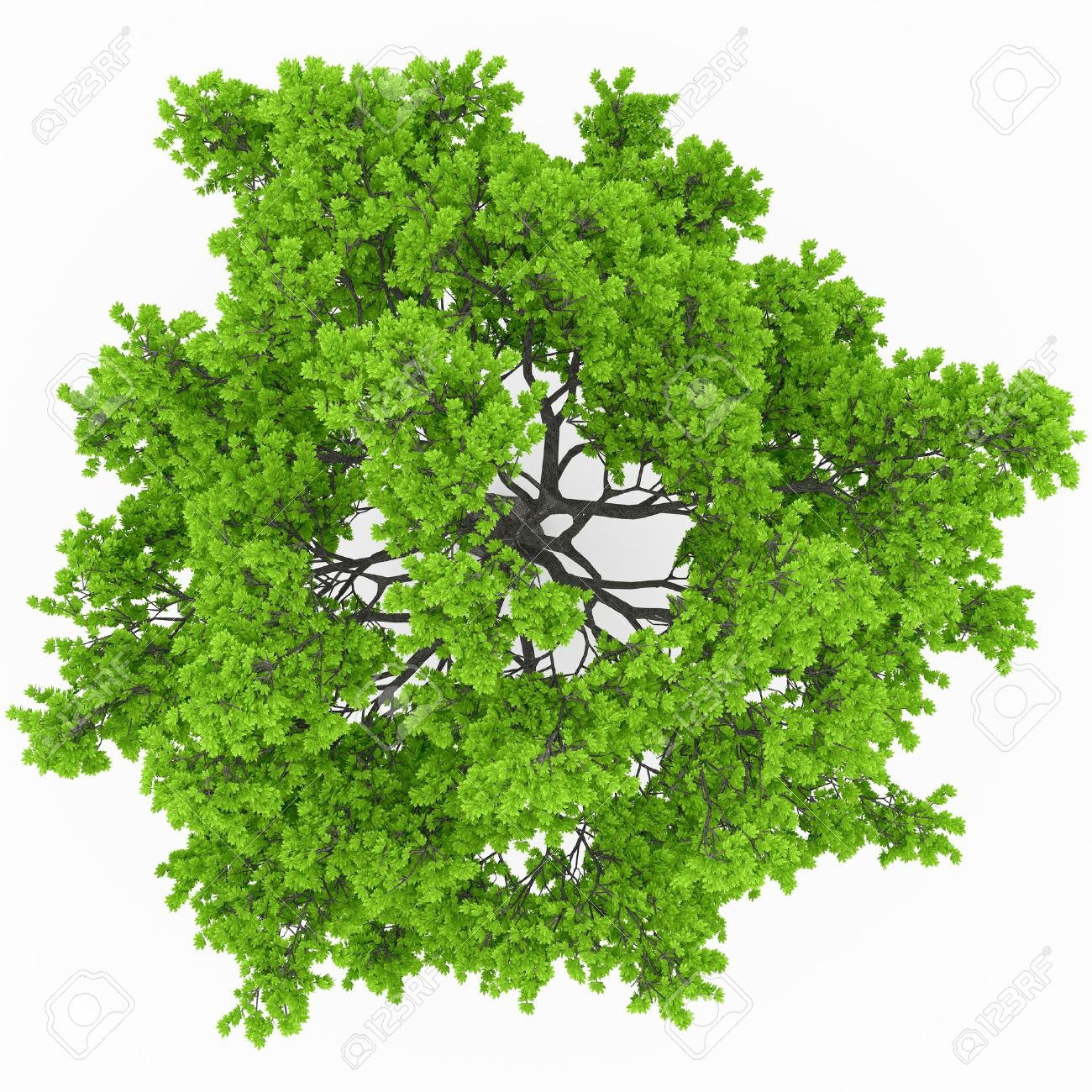 tree top view stock photo picture and royalty free image image