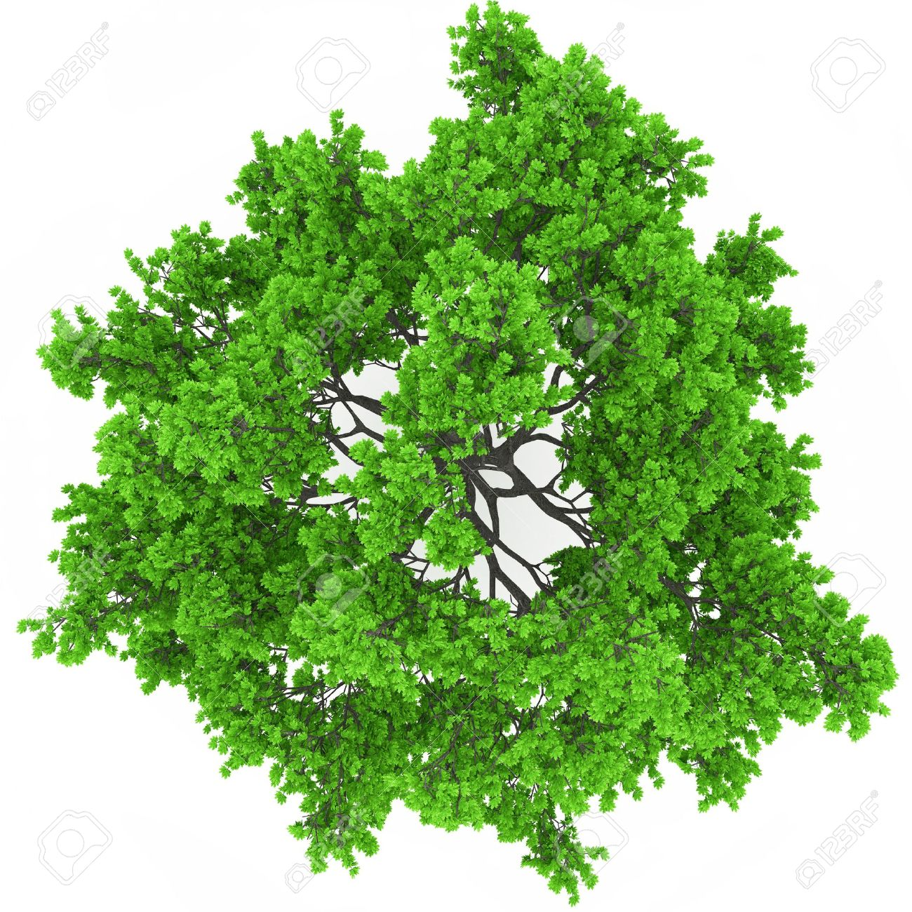 tree top view Stock Photo - 18942316