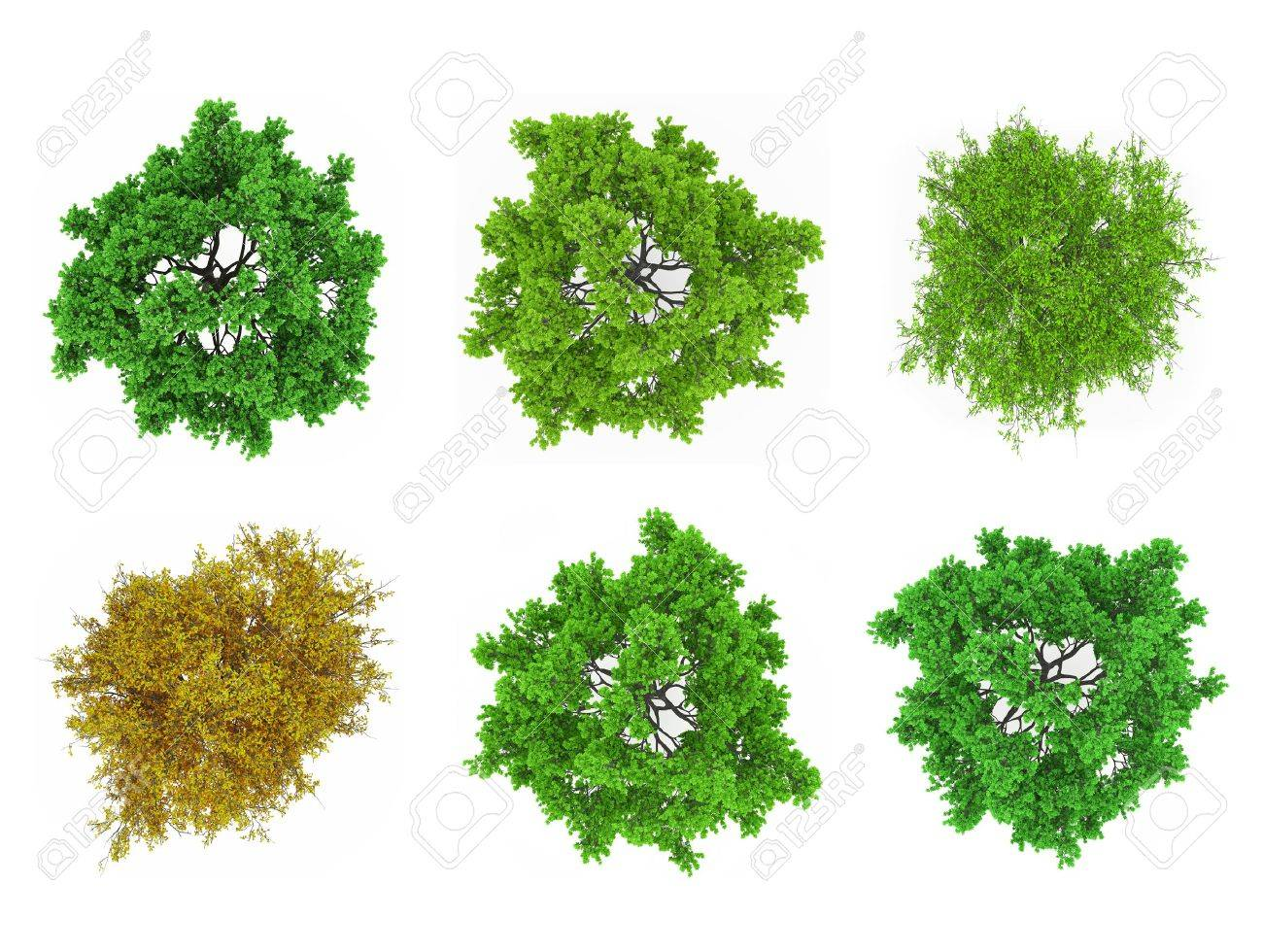 Tree tops isolated - 30440429