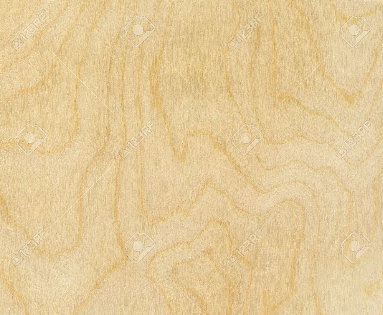 high resolution birch wood texture stock photo picture and royalty