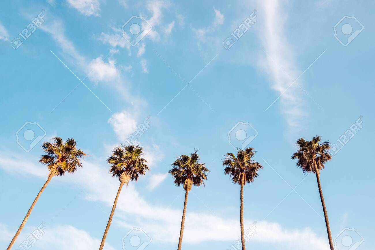 Top of highest palms in blue sky. Tall palms in sky - 148008169