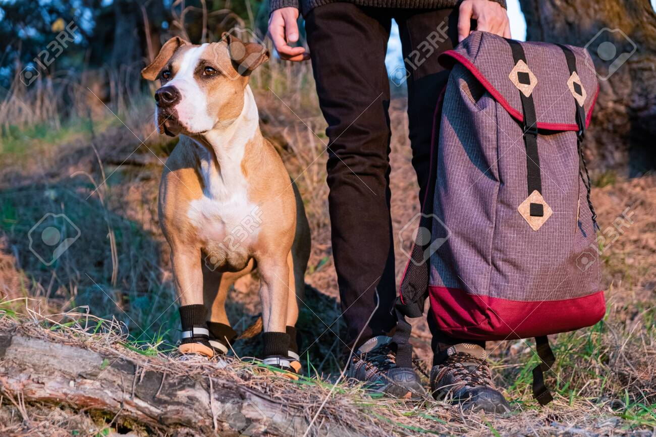 Dog In Hiking Shoes Stand Side