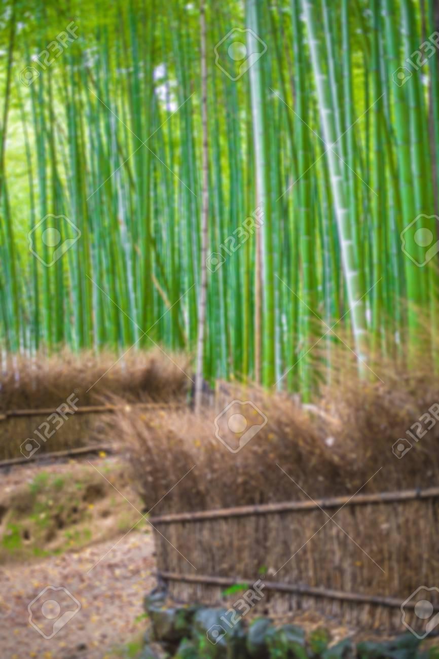 Pfad Zum Bambuswald Arashiyama Kyoto Japan Fur Den Hintergrund