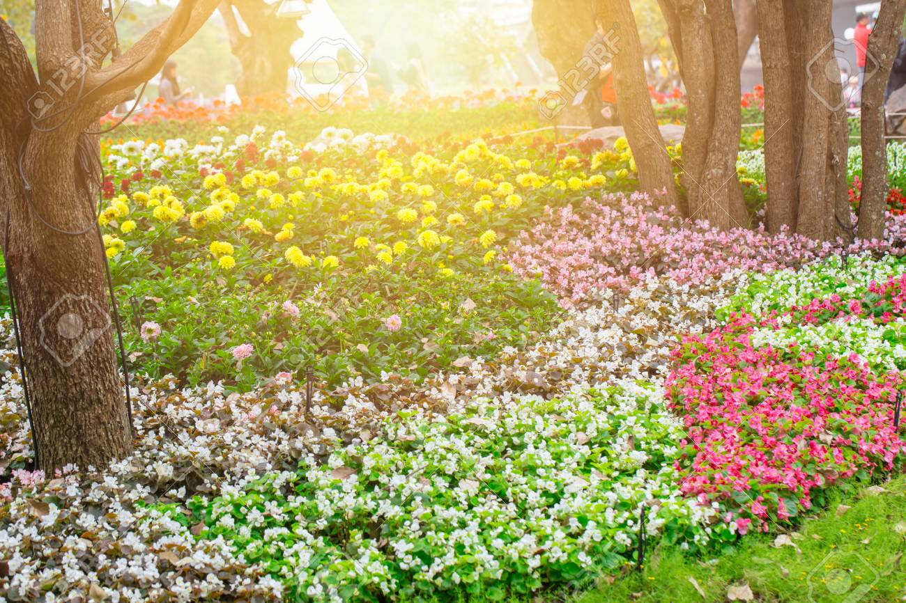 Beautiful Flower Garden Park Outdoor With Sunlight Stock Photo