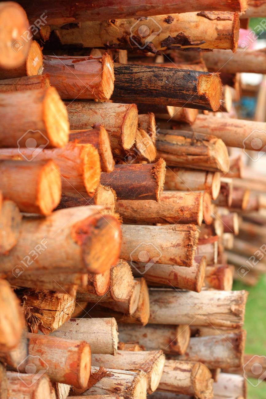 a pile of cut wood stump Stock Photo - 19595663