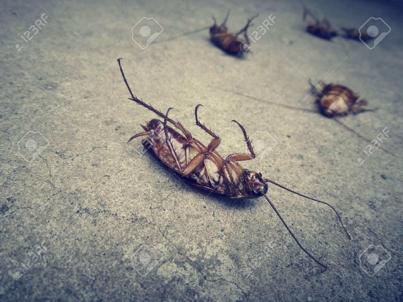 Close up of cockroach Standard-Bild - 27043655