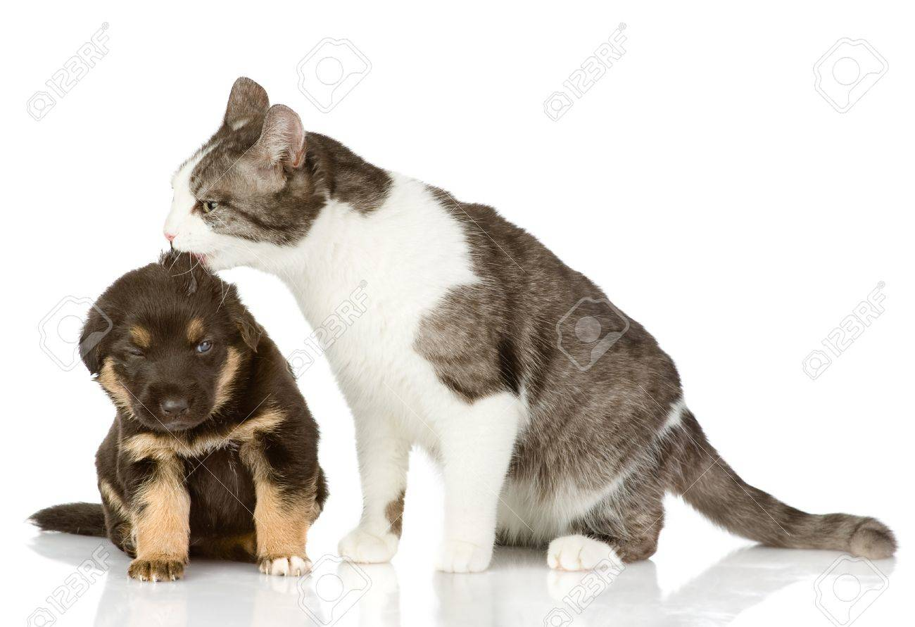 cat kisses a puppy  Isolated on a white background Stock Photo - 21657410