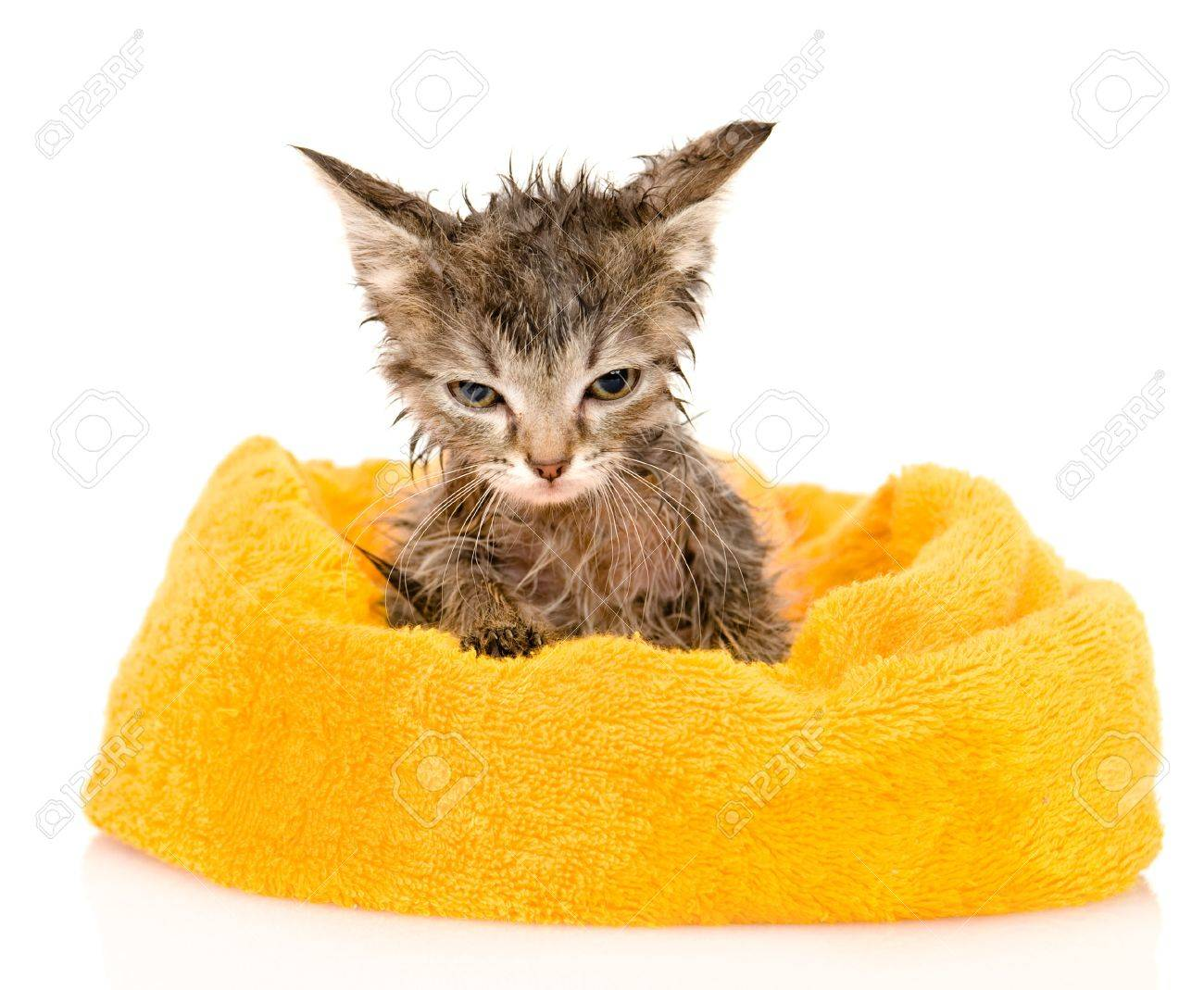 Cute soggy kitten after a bath  isolated on white background Stock Photo - 21759140