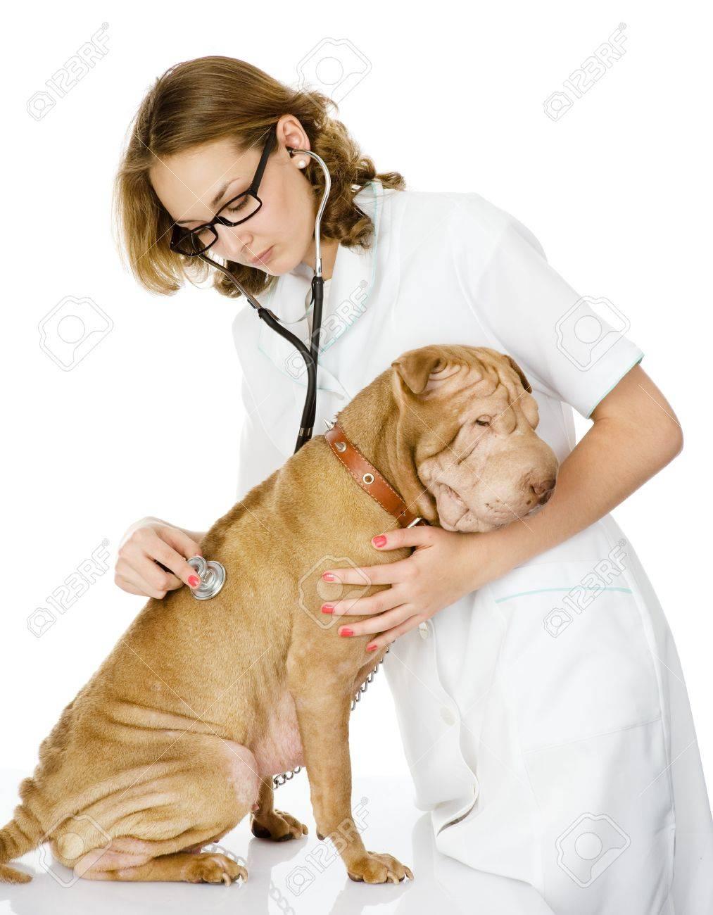 心拍 数 犬