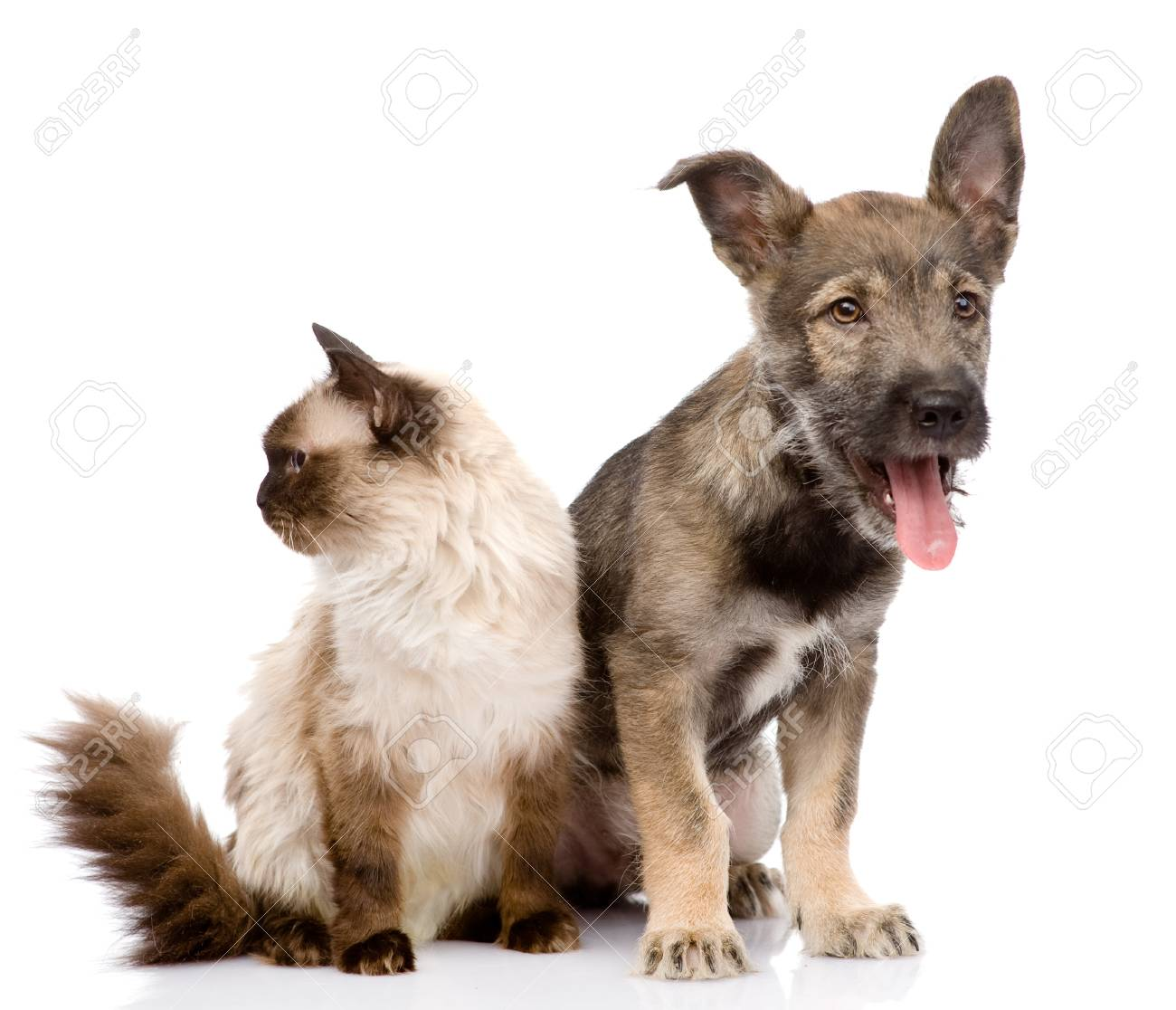 cat and dog together  focused on the cat  isolated on white Stock Photo - 21759182