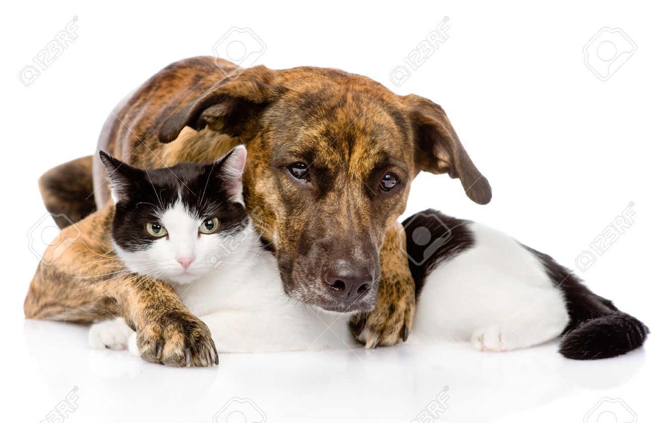 Cat Dog Breed Mix Mixed Breed Dog And Cat Lying