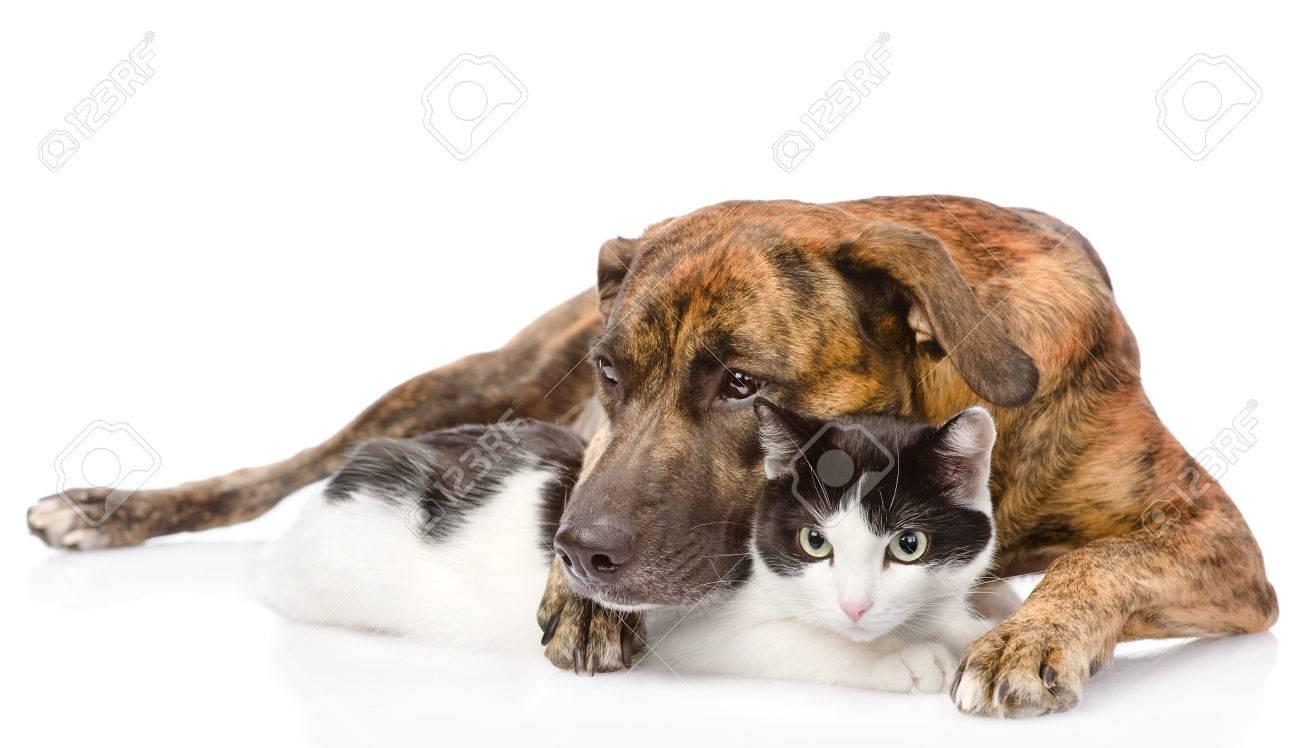 Cat Dog Breed Mix Mixed Breed Dog Hugging a Cat