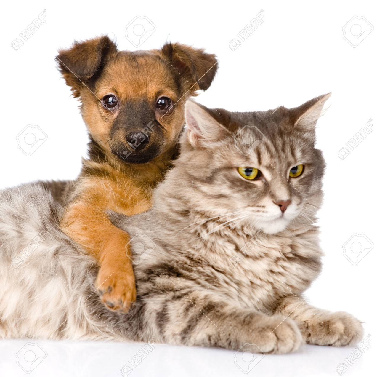 Cat Dog Breed Mix Mixed Breed Dog Hugging Cat