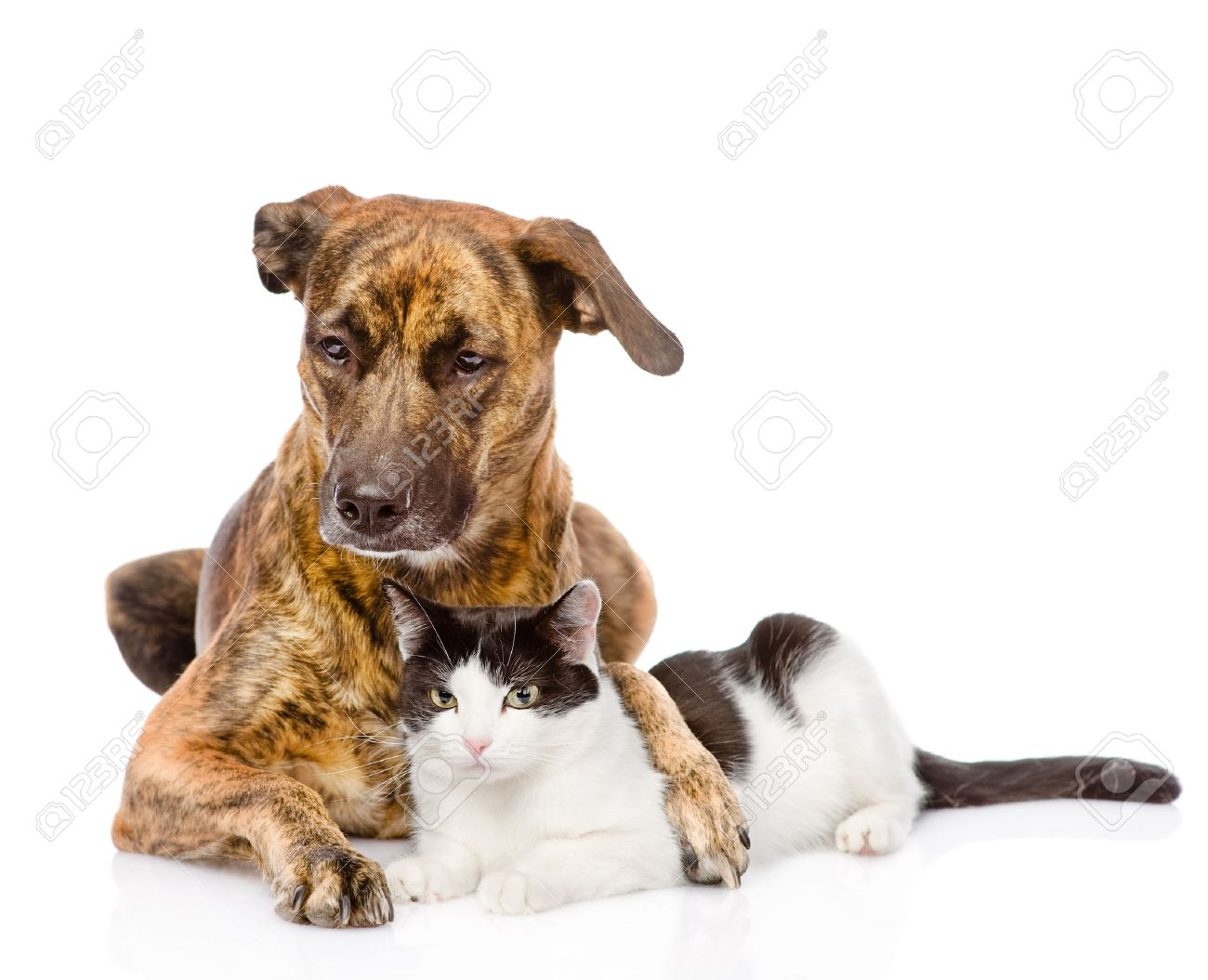 Cat Dog Breed Mix Mixed Breed Kitten Large Dog
