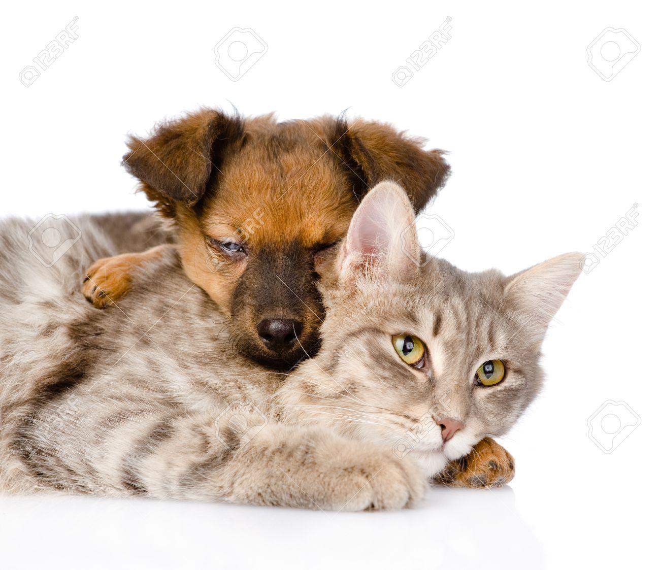 Cat Dog Breed Mix Mixed Breed Dog Hugging Cat