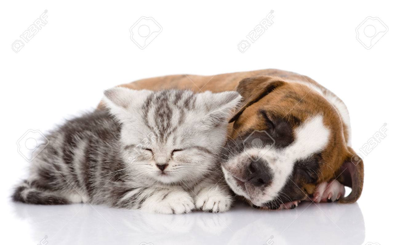 puppy and kitten images u0026 stock pictures royalty free puppy and