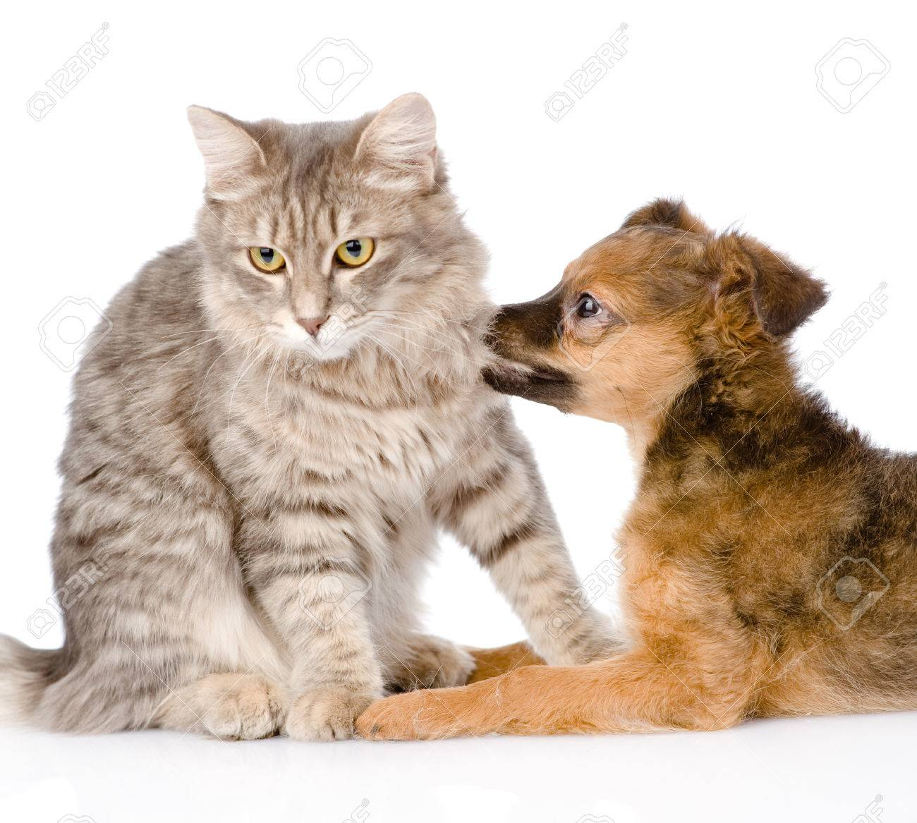 dog bites cat  isolated on white Stock Photo - 25241666