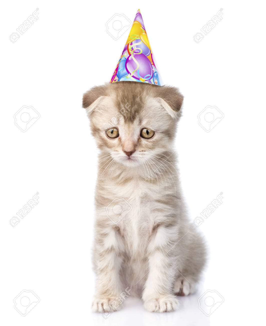 Sad Cat With Birthday Hat Isolated On White Background Stock Photo