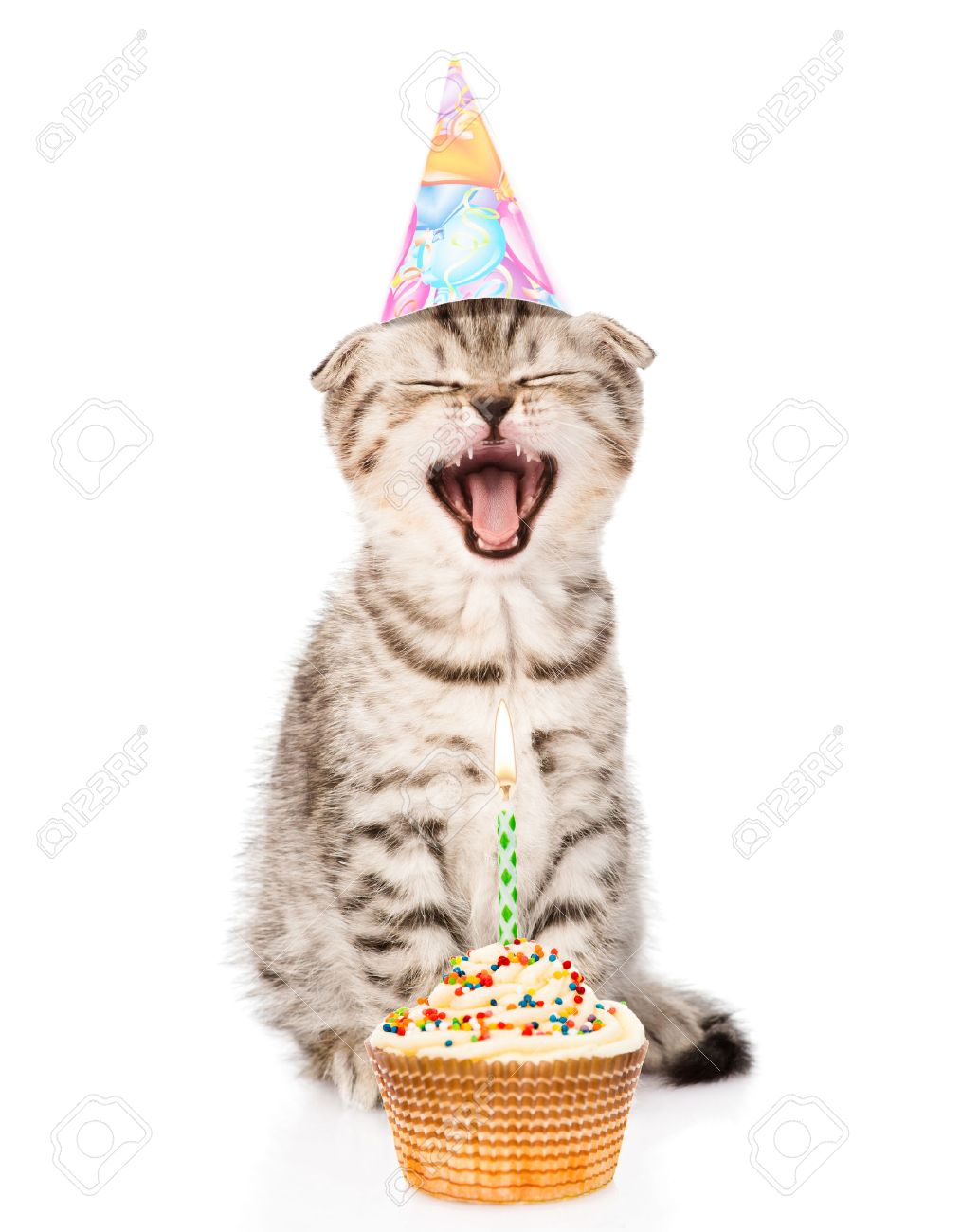 Laughing Cat With Birthday Hat And Cake Isolated On White Background Stock Photo